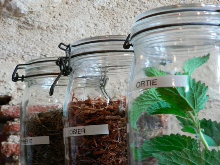 Plantes pour la préparation des traitements