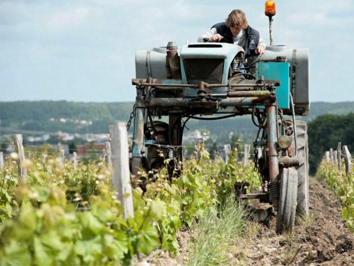Travail des sols dans les vignes
